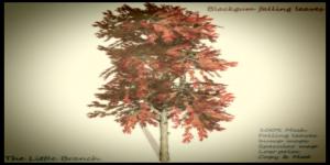 Blackgum_falling_leaves